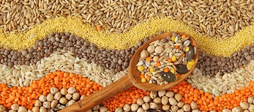 Купить зерно пшеница ячмень овес кукуруза